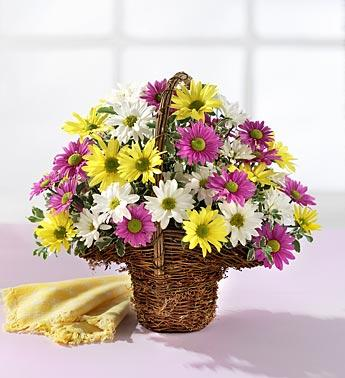 Spring Daisy Basket in Burlington NJ, Stein Your Florist