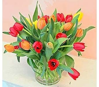 Lovely Tulips in San Francisco CA, Fillmore Florist