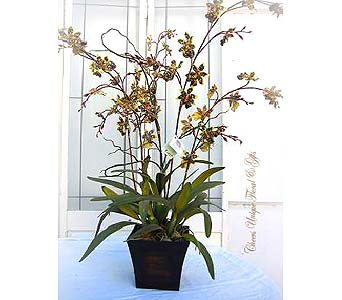 Silk Orchid Plants in Lake Forest CA, Cheers Floral Creations