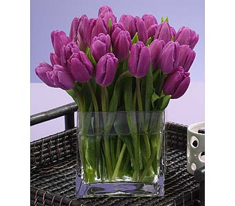 30 Purple Tulips  in Southfield MI, Thrifty Florist