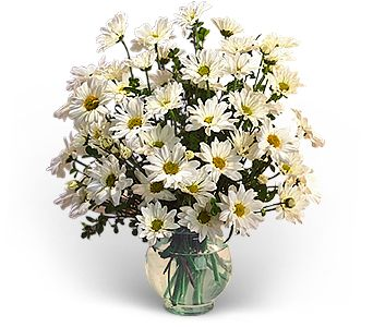 Delightful Daisies in Chicago IL, Chicago Flower Company