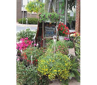 10'Blooming Hanging Basket in State College PA, George's Floral Boutique