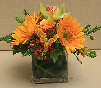 Sunshine Squared in Bellevue WA, CITY FLOWERS, INC.