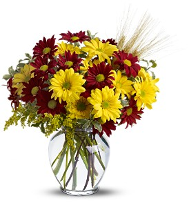 Fall for Daisies in Rock Island IL, Colman Florist