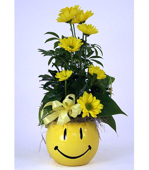 Smiley Face in Indianapolis IN, Gillespie Florists