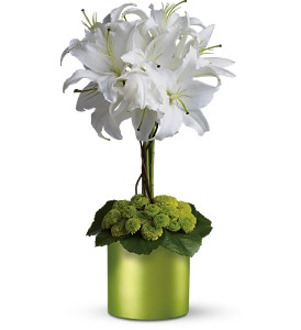 White Lily Topiary in New Rochelle NY, Flowers By Sutton