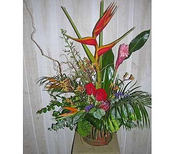 Tropical Flair in Dallas TX, Petals & Stems Florist