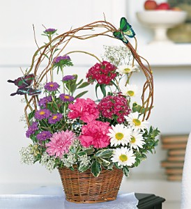 Butterflies and Blossoms in Newport News VA, Pollards Florist