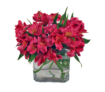 Pink Alstroemeria in Indianapolis IN, 317 Flowers