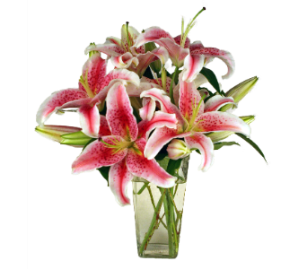 Fragrant Stargazer Lilies in Indianapolis IN, 317 Flowers