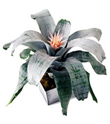 Classic Bromeliad in New York NY, CitiFloral Inc.