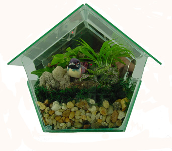 Raimondi''s Botanical Birdhouse Terrarium in Baltimore MD, Raimondi's Flowers & Fruit Baskets