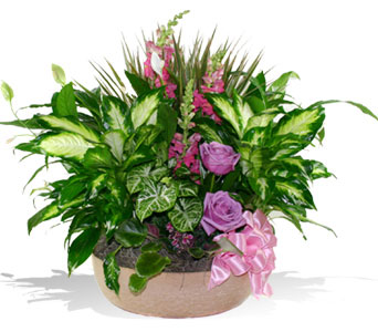 Green Plants Dish Gardens Delivered in McLean Bethesda or the