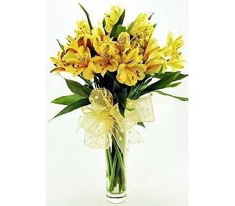 Yellow Alstroemeria in Clear G Local and Nationwide Guaranteed Delivery - GoFlorist.com