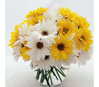 Yellow and White Daisies Local and Nationwide Guaranteed Delivery - GoFlorist.com