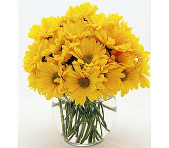 Yellow Daisies Local and Nationwide Guaranteed Delivery - GoFlorist.com