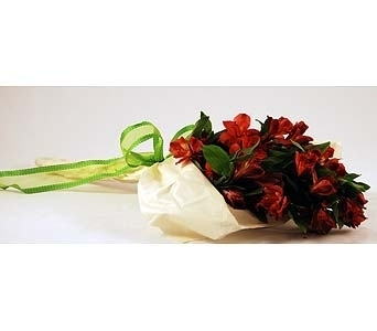 Red Alstroemeria Wrap Local and Nationwide Guaranteed Delivery - GoFlorist.com