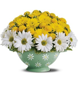 Teleflora's Daisy Colander Bouquet in San Diego CA, Flowers Of Point Loma