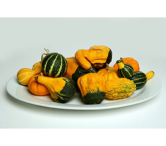 Mini-Pumpkins and Gourds in Oshkosh WI, House of Flowers