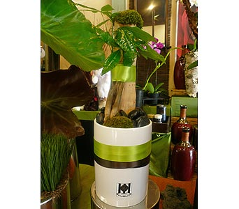 Prosperous Money Tree in Santa Monica CA, Santa Monica Florist