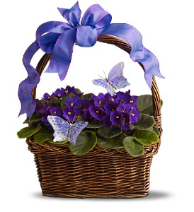 Violets and Butterflies in Three Rivers MI, Ridgeway Floral & Gifts