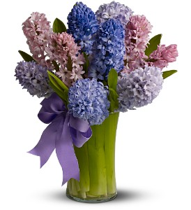 Fragrant Hyacinth in Scarborough ON, Helen Blakey Flowers