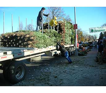 Christmas trees delivery in Brooklyn NY, David Shannon Florist & Nursery