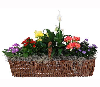 All Blooming Canoe Basket in Towson MD, Radebaugh Florist and Greenhouses