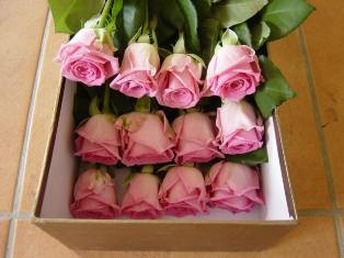 Pink roses in the box in Etobicoke ON, Alana's Flowers & Gifts