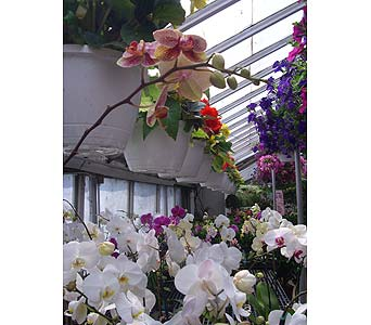 Greenhouse in Lansing MI, Hyacinth House