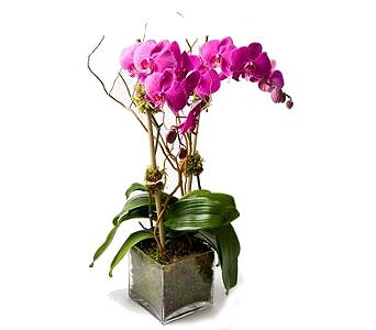 Double Lavender Orchid in Palm Springs CA, Palm Springs Florist, Inc.