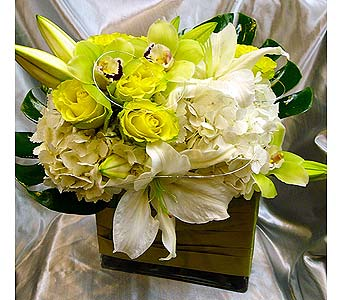 Lime Twist in Santa Monica CA, Santa Monica Florist