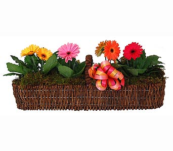 Gerbera Daisy Canoe Basket in Towson MD, Radebaugh Florist and Greenhouses