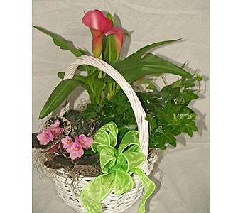 Mini Calla, Violet, and Ivy Basket in Coplay PA, The Garden of Eden