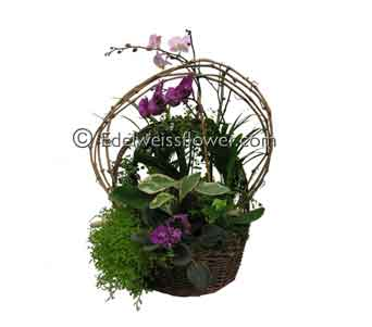 European Orchid & Violet Planter Basket Garden in Santa Monica CA, Edelweiss Flower Boutique