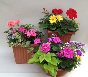 Colorful Spring Planters in Utica NY, Chester's Flower Shop And Greenhouses