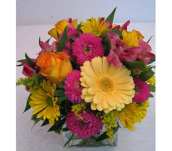 Sassy in Lower Gwynedd PA, Valleygreen Flowers and Gifts