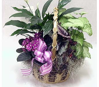 Planter Basket in Lower Gwynedd PA, Valleygreen Flowers and Gifts