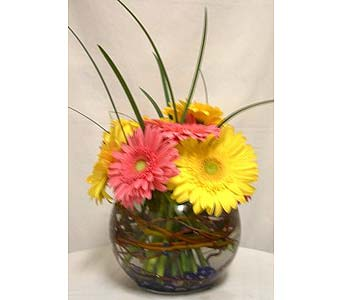 Gerbera Daisy Centerpiece in Salisbury MD, Kitty's Flowers