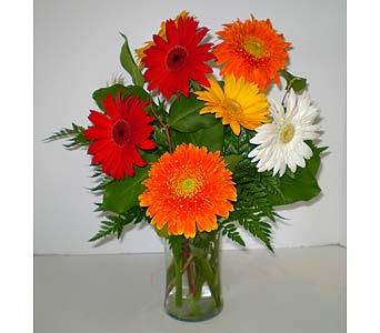 Gorgeous Gerberas in Falmouth MA, Falmouth Florist 508-540-2020