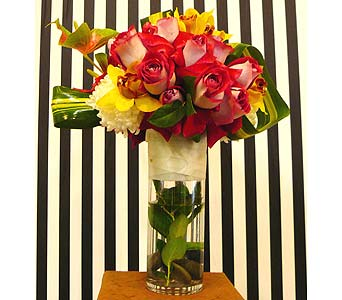 Strikingly Beautiful in Santa Monica CA, Santa Monica Florist