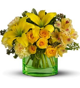 You are My Sunshine by Teleflora in Arlington VA, Twin Towers Florist