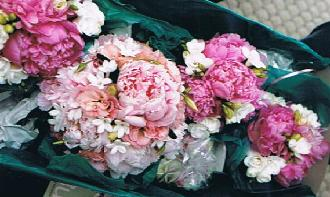 Peony Bouquets in Ottawa ON, The Fresh Flower Company
