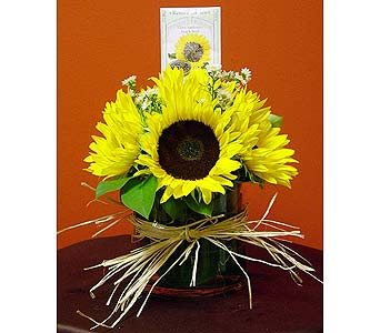 Sunny Seed Delight in Massapequa Park NY, Bayview Florist & Montage  1-800-800-7304
