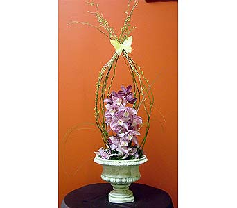 Classic Orchid in Massapequa Park NY, Bayview Florist & Montage  1-800-800-7304