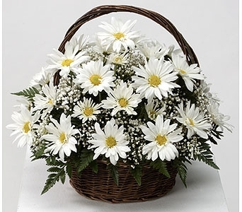 Daisy Basket (Metro-Detroit Only) in Southfield MI, Thrifty Florist