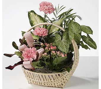 Plants Delivery Southfield MI Thrifty Florist Southfield Plants