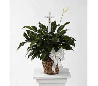 Peace Lily Sympathy Plant in Southfield MI, Thrifty Florist