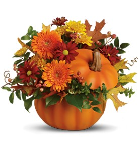 Teleflora's Somethin' Pumpkin in Bloomington IL, Beck's Family Florist