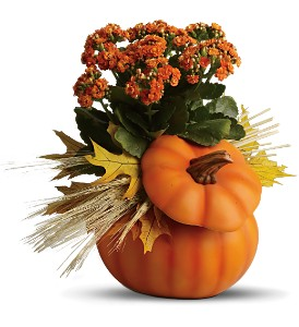 Teleflora's Harvest Pumpkin in Oklahoma City OK, Array of Flowers & Gifts